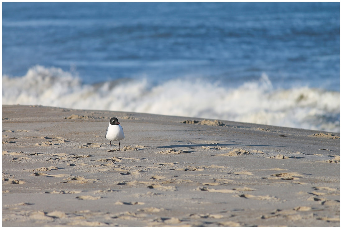 Bird at sunset in the Outer Banks of NC | Nicole Watford Photography