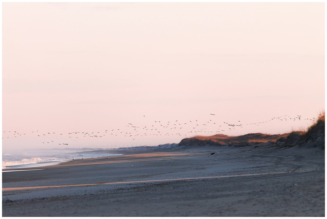 Migratory birds at sunset in the Outer Banks of NC | Nicole Watford Photography