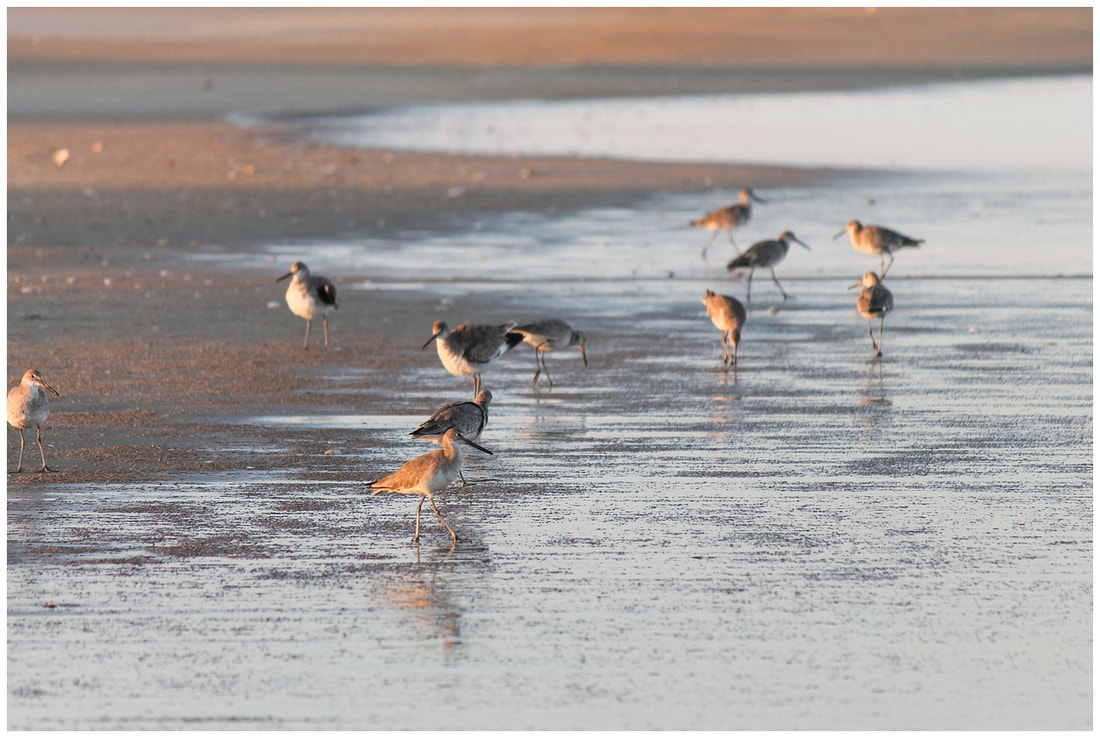 Birds at sunset in the Outer Banks of NC | Nicole Watford Photography